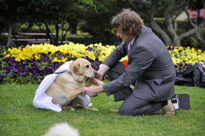 犬と結婚04