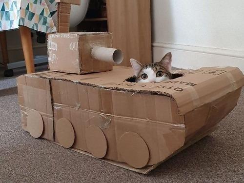 ダンボール猫戦車00