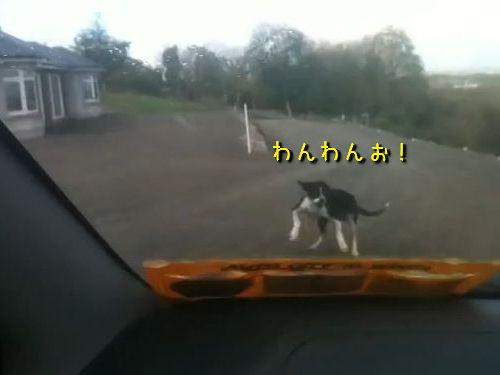興奮する犬00