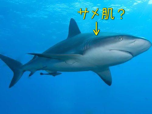サメ肌を電子顕微鏡で見ると00