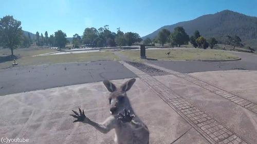これぞオーストラリア…パラグライダー着地時にあの動物がお出迎え04