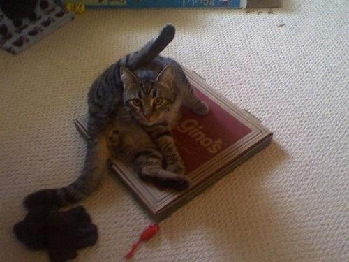 ピザ猫03