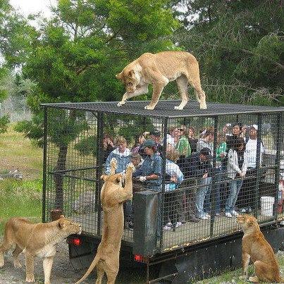 野生の動物を見るときはこうあるべきだよね01