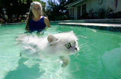 泳ぐ猫07
