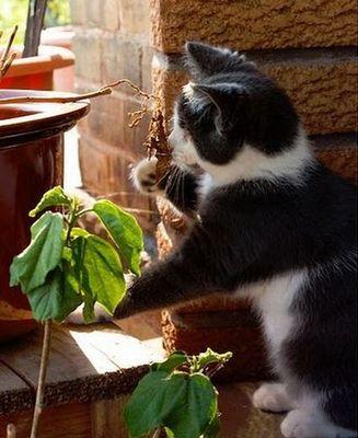 盲目の猫08