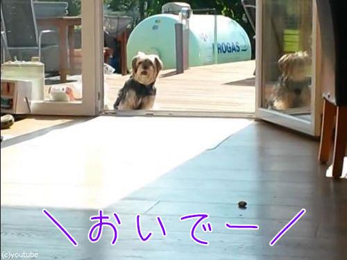 窓が無くても入って来ない犬00