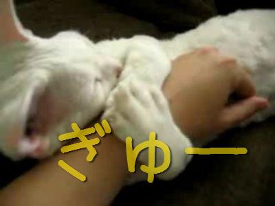 ぎゅーっとする猫