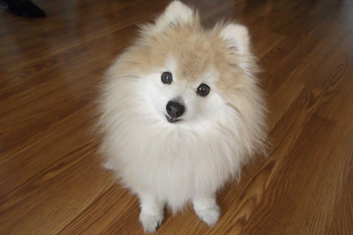 子犬に喜ぶ犬04