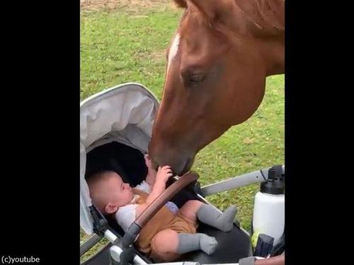 赤ちゃんと馬の出会い00