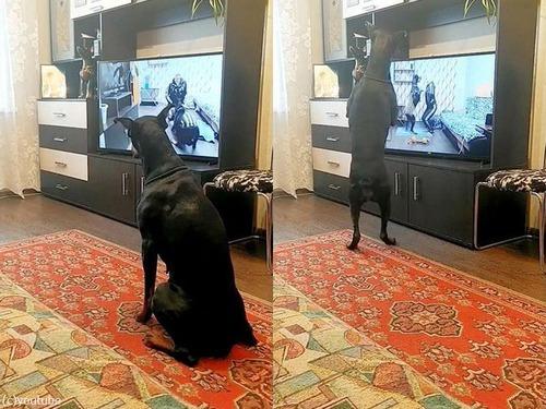 動画を見てエクササイズする犬00
