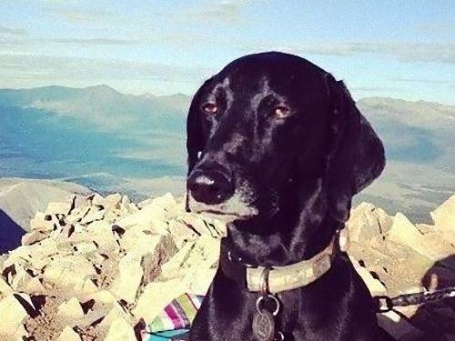 世界で最も感動の薄い犬02