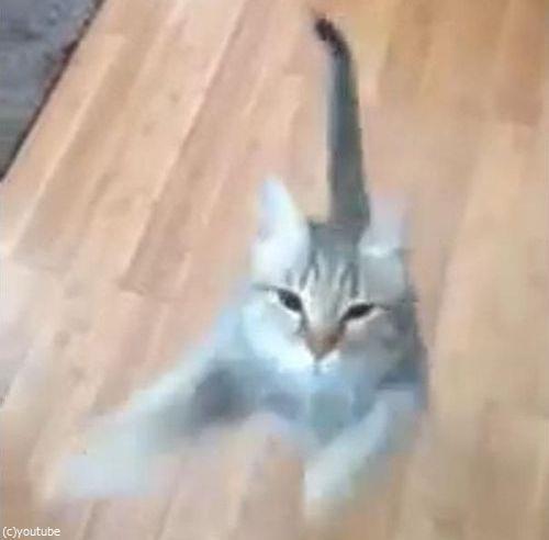 「うちの猫は…私が歌うと飛びついてくる」03