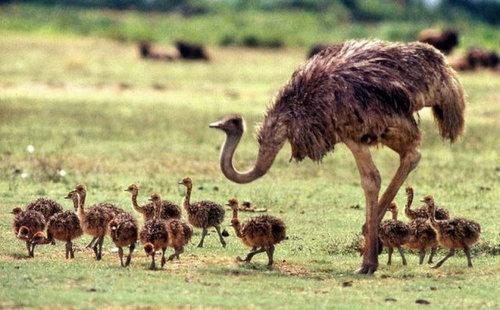 16動物の親子