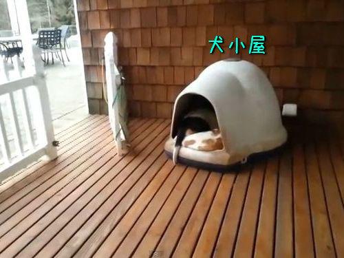 犬小屋の中00