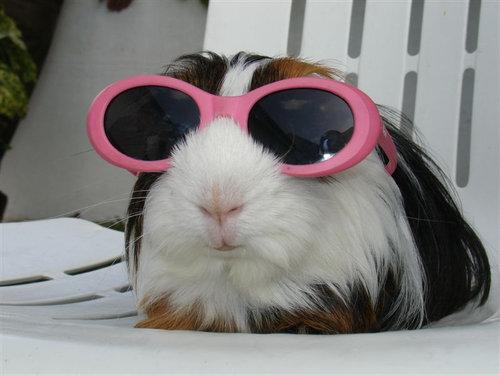 04メガネやサングラスをかける動物たち