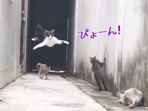 この猫の躍動感よ00