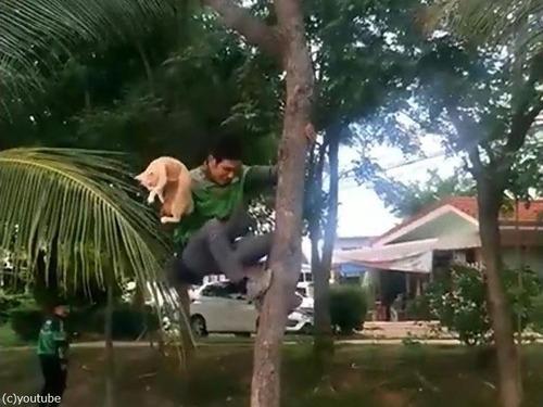 木から降りられない猫04