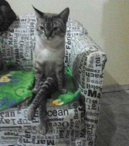 ボス猫05