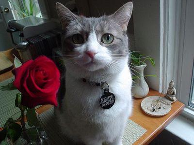バラの似合うペット15