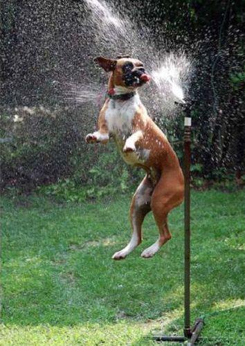 スプリンクラー犬15
