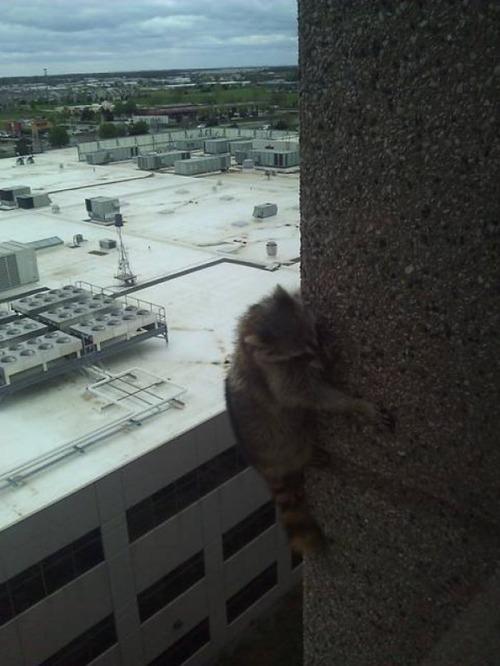 窓にやってきたお客さんたち17