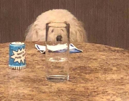 ガラス越しの動物12