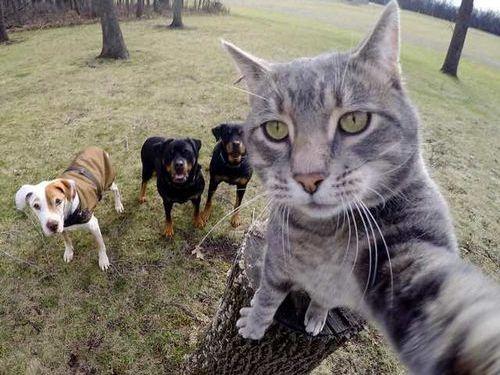 犬たちと一緒に自分撮りをする猫00