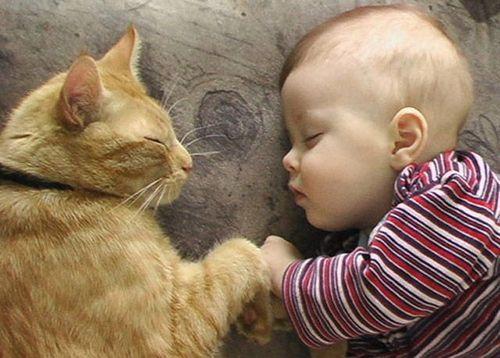 ペットと睡眠07
