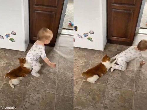 猫をお尻にぶら下げる赤ちゃん00