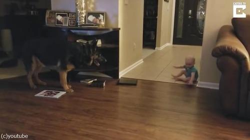 追いかけっこする赤ちゃんと犬03