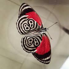89番の蝶々08