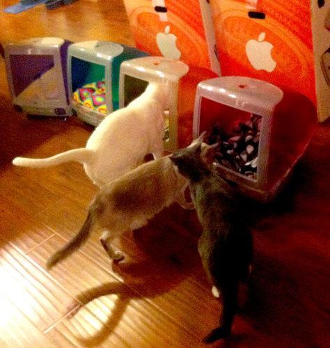 iMacと猫03