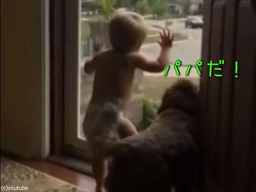 赤ちゃん&犬「パパが帰ってきた!」00