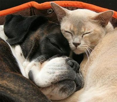 動物枕04