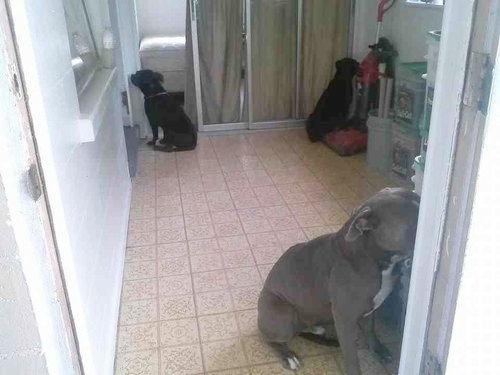 反省室の犬たち01