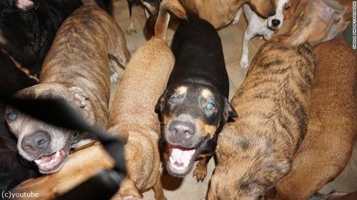 バハマで97匹の犬を保護03