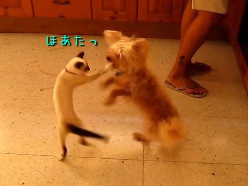 犬に猛アタックする猫00