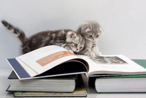 読書猫04