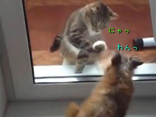 猫パンチvs犬パンチ00
