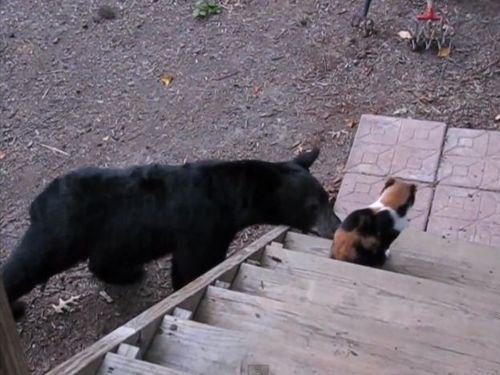 クマと猫01