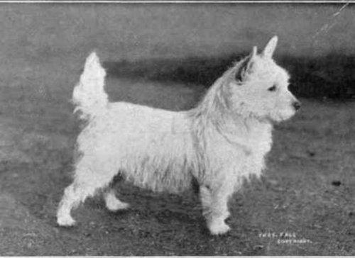 犬種は100年でこう変わった19