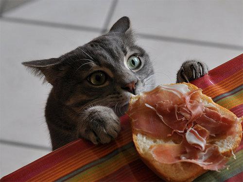 泥棒猫01
