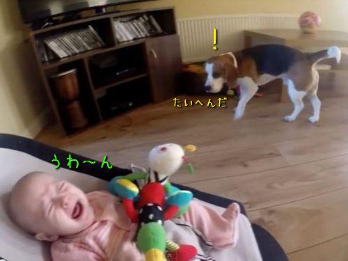 犬「赤ちゃんが泣いちゃった!」00
