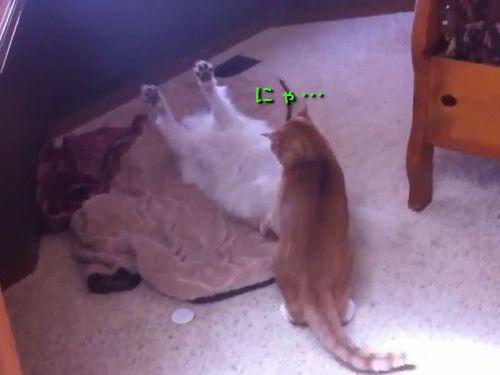 犬と猫のモフモフ対決00