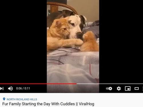子猫と猫と犬