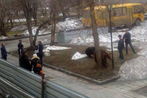 ロシアのクマ08