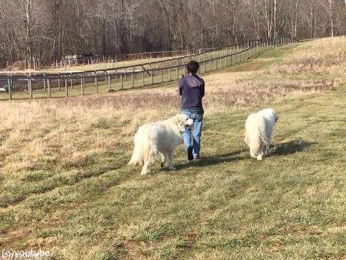 農場で動物と散歩01