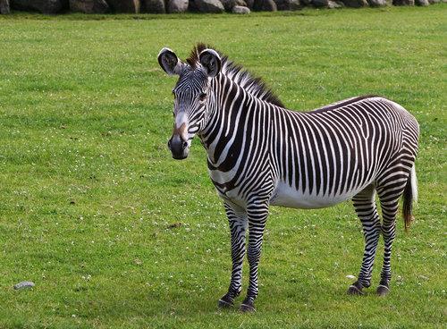 陸上最速の動物19