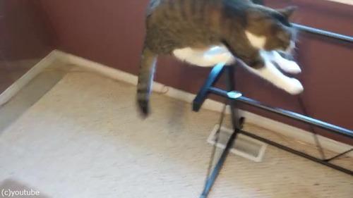 お気に入りの机の天板を外されて困惑する猫02