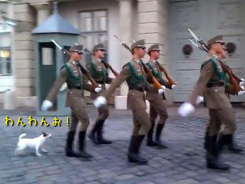 兵隊の行進に参加する犬